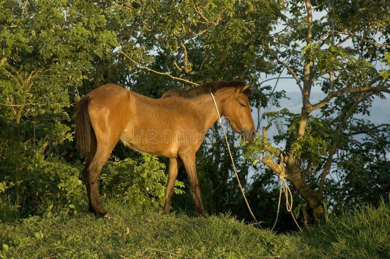 Poor Horse