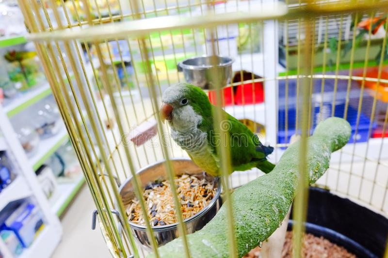 Poor parrot for sale at pet shop in cage. Top view royalty free stock image