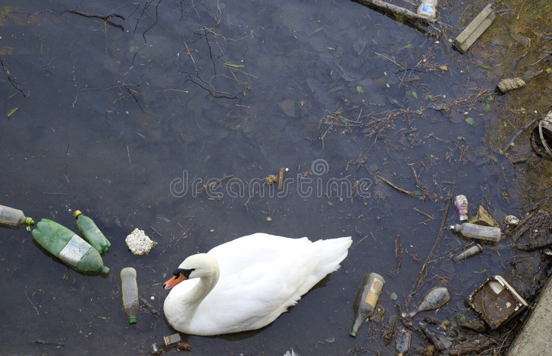 Poor swan. A poor swan in a garbage sea stock images