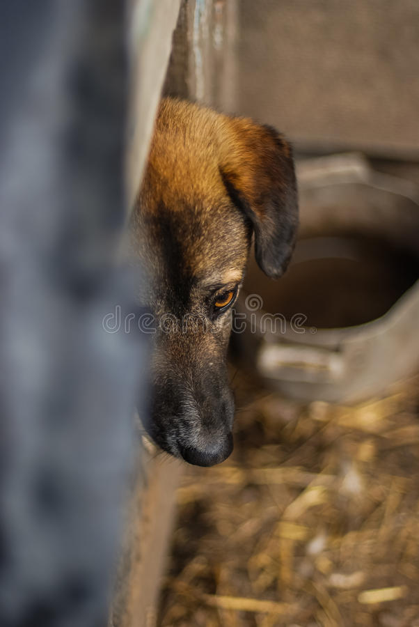 Poor yard dog on the chain in the booth. Close up photo stock images