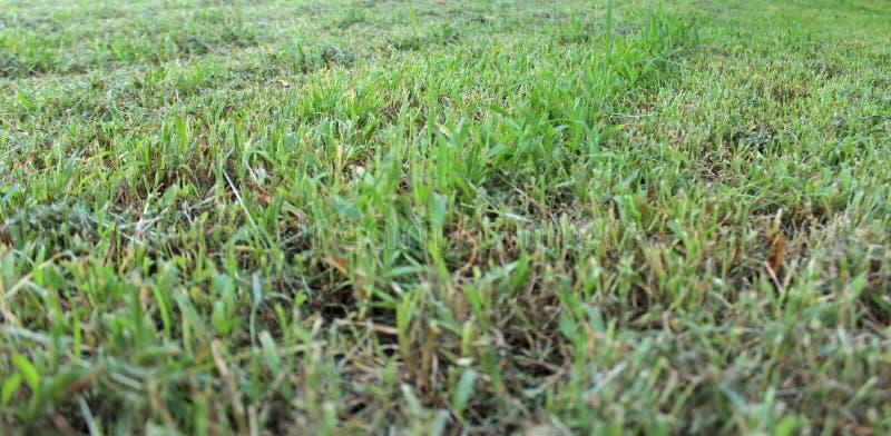 Poorly mowed grass stock photo