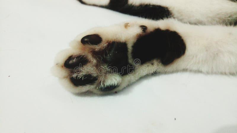 Poot van een kat royalty-vrije stock afbeelding