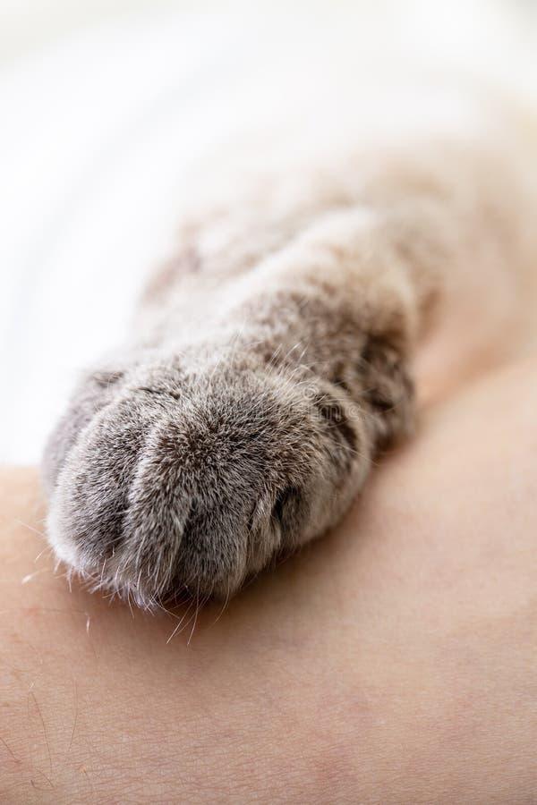 Poot van een kat op het menselijke lichaam stock afbeelding