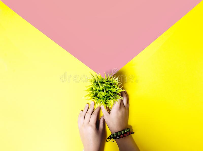 Pop art concept. Yellow and. Pop art style background. envelope concept and green grass pot stock photography