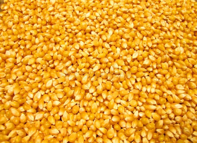 Download Popcorn Kernels stock photo. Image of healthy, popcorn - 524096