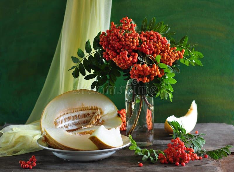 popiółu życia melon wciąż dziki zdjęcie royalty free