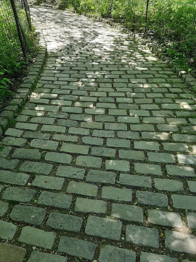 Popielata ceglana ścieżka otaczająca z natury w central park, Nowy Jork obraz royalty free