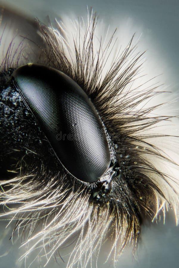 Popielata Górnicza pszczoła, pszczoła, pszczoły zdjęcie stock