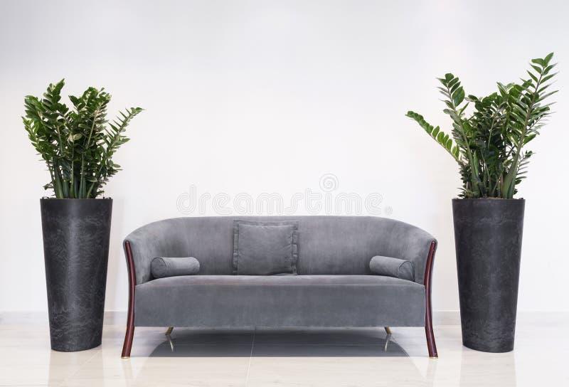 Popielata kanapa w nowożytnym wnętrzu fotografia stock