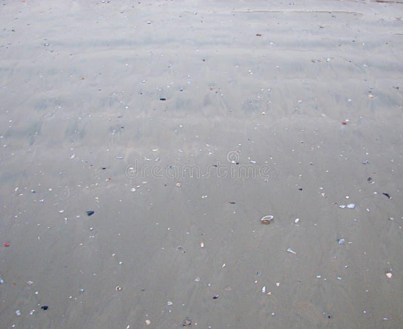 Popielata Mokrawa Piaskowata plaża z morze skorupami - Naturalny tło zdjęcia stock