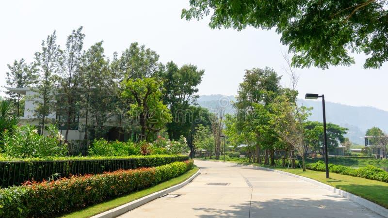 Popielatego koloru betonowa droga po środku drzew pod podcieniowaniem, kolorową kwiatonośną rośliną i zieleń krzakiem sideway, zdjęcie royalty free