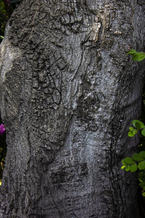 Popielaty drewniany tło z zielonymi małymi liśćmi obraz stock