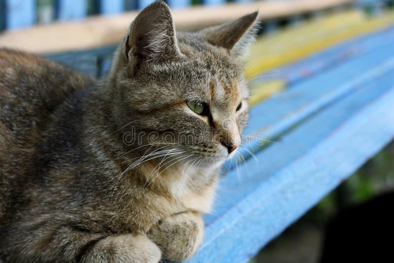 Download Popielaty kot obraz stock. Obraz złożonej z ssak, futerko - 53788611