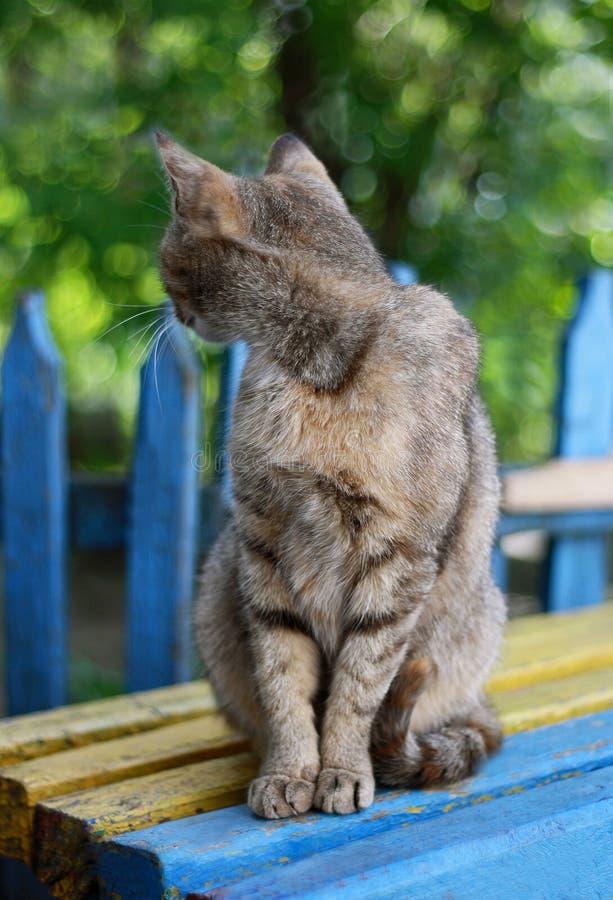 Download Popielaty kot zdjęcie stock. Obraz złożonej z fence, pasiasty - 53788672