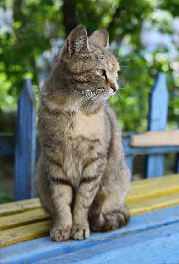 Download Popielaty kot obraz stock. Obraz złożonej z relaks, fence - 53788747