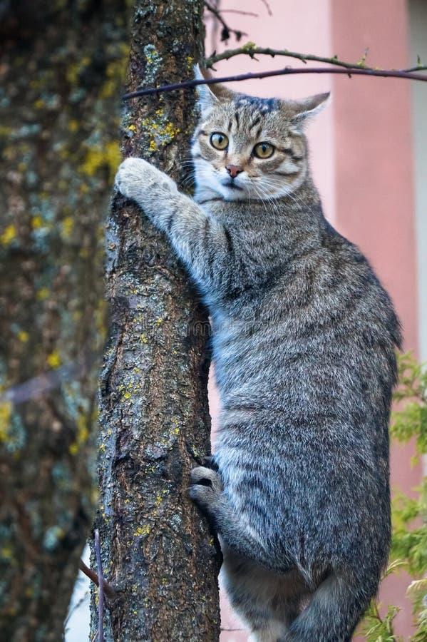 Popielaty kot na drzewnym zwierzęciu fotografia royalty free