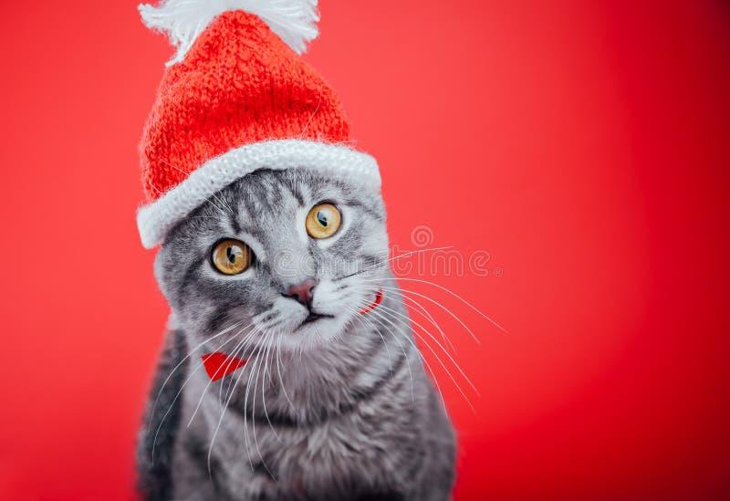 Popielaty tabby kot jest ubranym Santa ` s kapelusz na czerwonym tle bożych narodzeń pojęcia nowy rok zdjęcia stock
