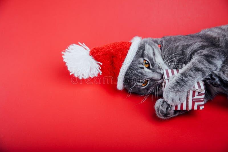 Popielaty tabby kot jest ubranym Santa ` s kapelusz na czerwonym tle i sztuki z prezenta pudełkiem bożych narodzeń pojęcia nowy r zdjęcia stock