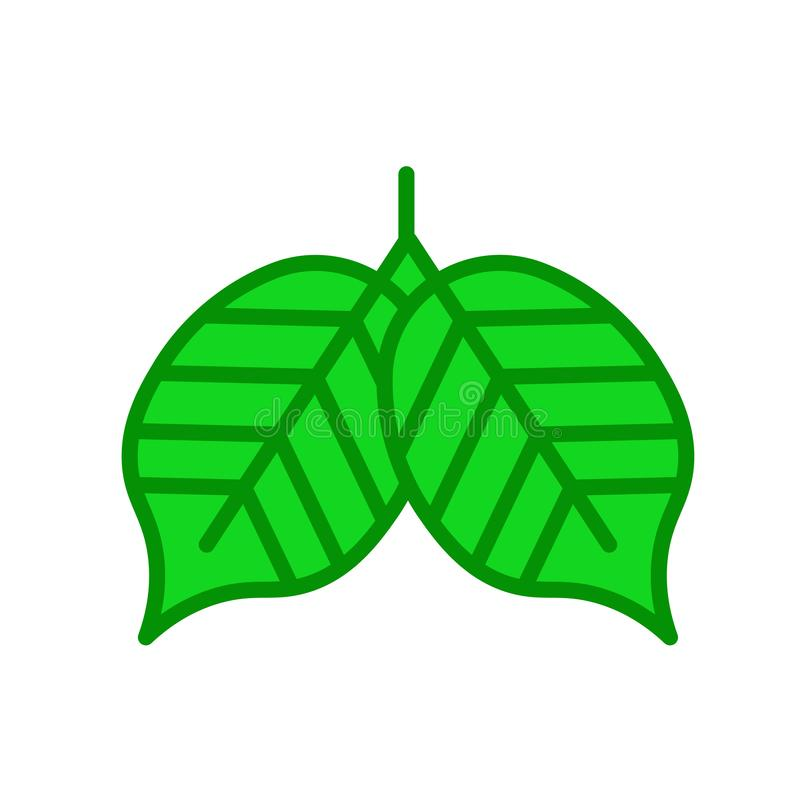 Poplar leaf icon vector sign and symbol isolated on white background, Poplar leaf logo concept royalty free illustration