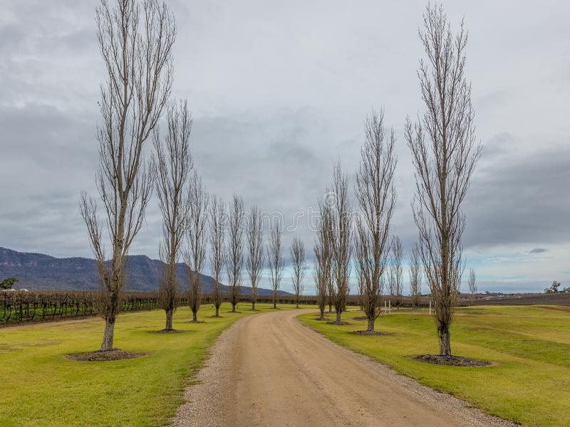 Poplar tree lined driveway royalty free stock photos