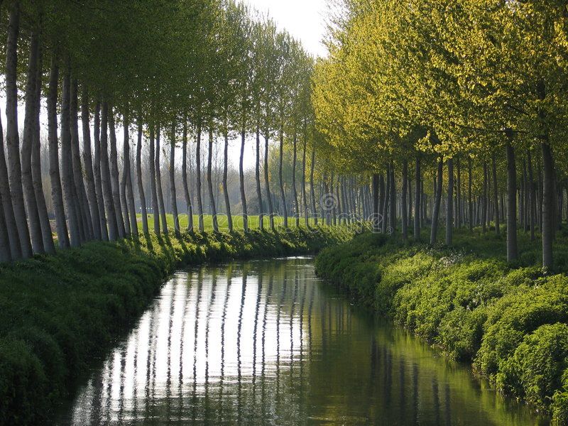 Poplars and dark river royalty free stock photography