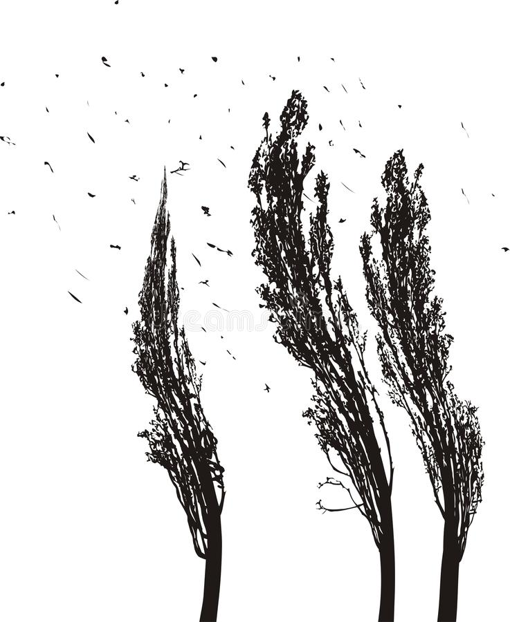Download Poplars in the wind stock vector. Image of tall, illustration - 30431948