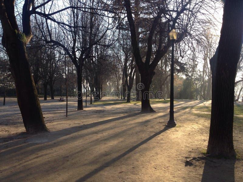 Popołudnie w parku fotografia royalty free