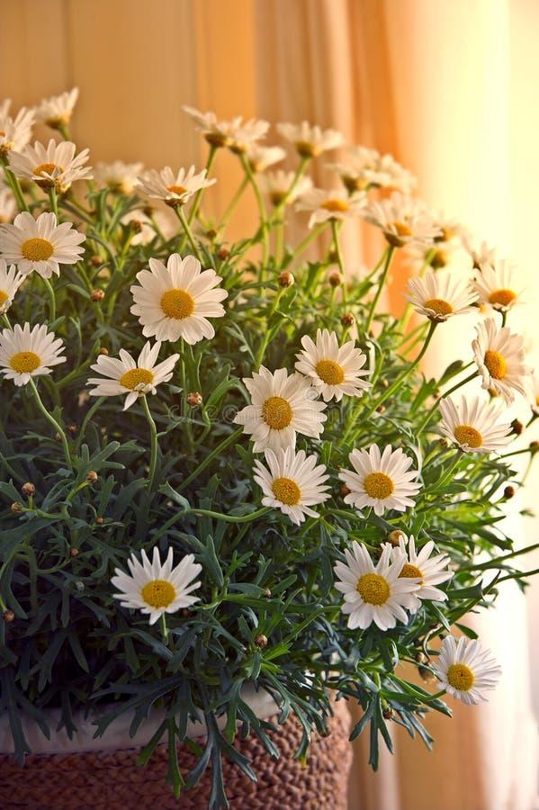 popołudniowe słońce banda kwiat obrazy stock