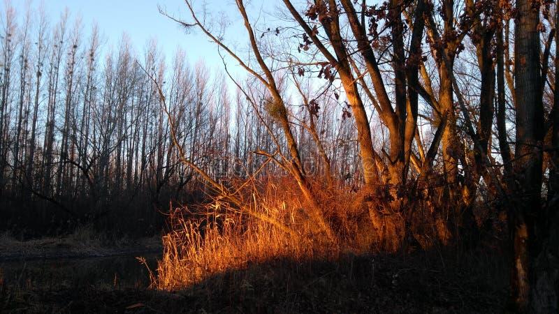 Popołudniowy słońce w lesie zdjęcia stock