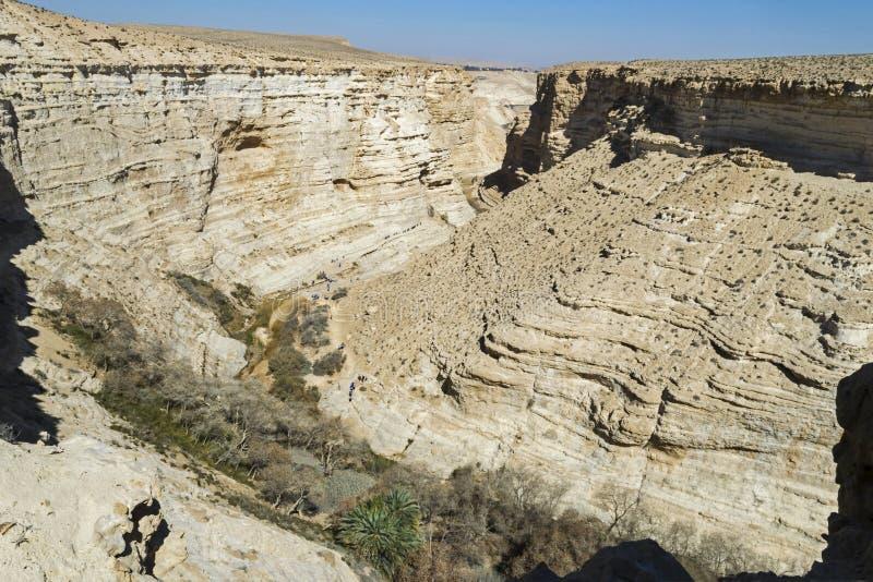 Poppeldunge i den Ein Avdat kanjonen i Israel royaltyfria foton