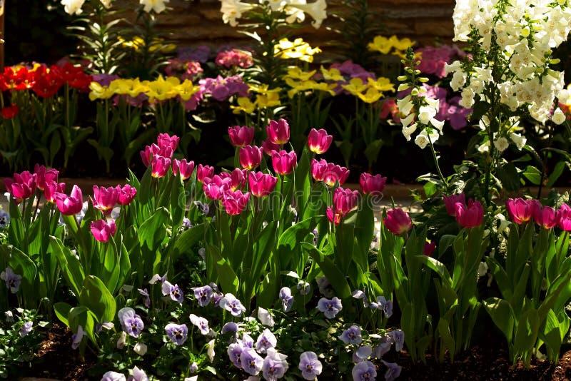 Download Poppies stock image. Image of wallpapaer, pink, spring - 106123
