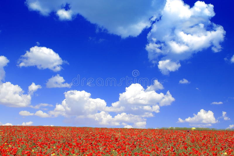 Download Poppies stock photo. Image of fresh, blue, flowers, beautiful - 27875708