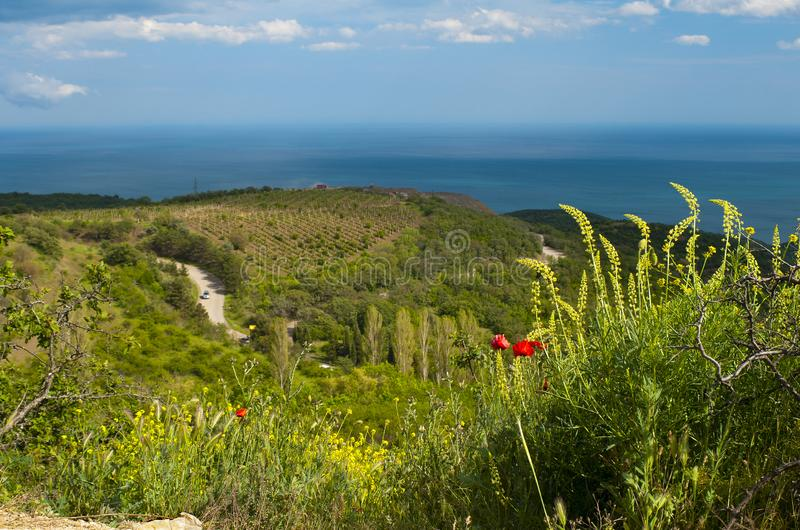 Poppies above the mountain road, Crimea royalty free stock images
