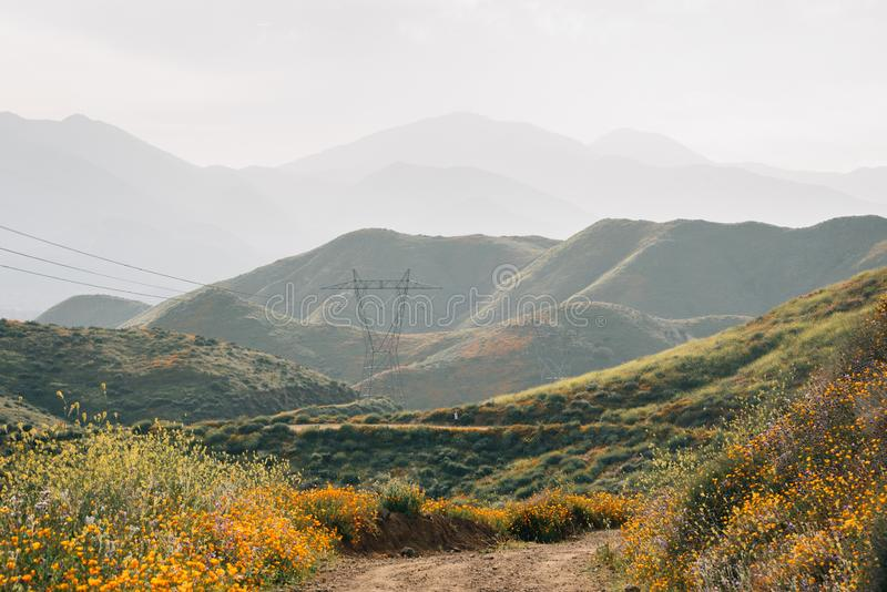 Poppies along the Walker Canyon Trail with view of hills and mountains in Lake Elsinore, California.  royalty free stock photography