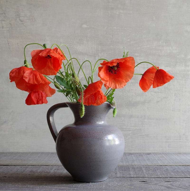 Poppies. In a bellarmine for a grey background stock photography
