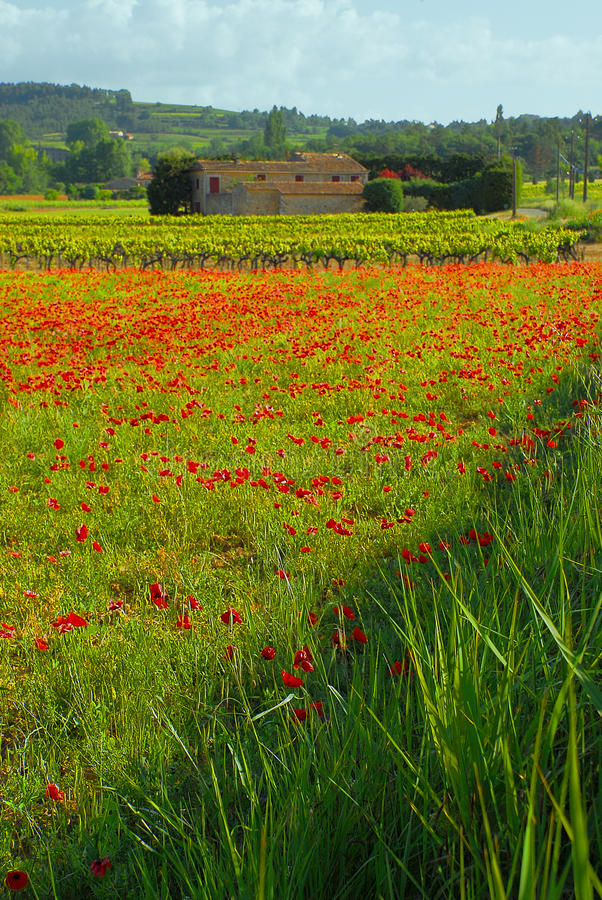 Poppies and Building royalty free stock photography