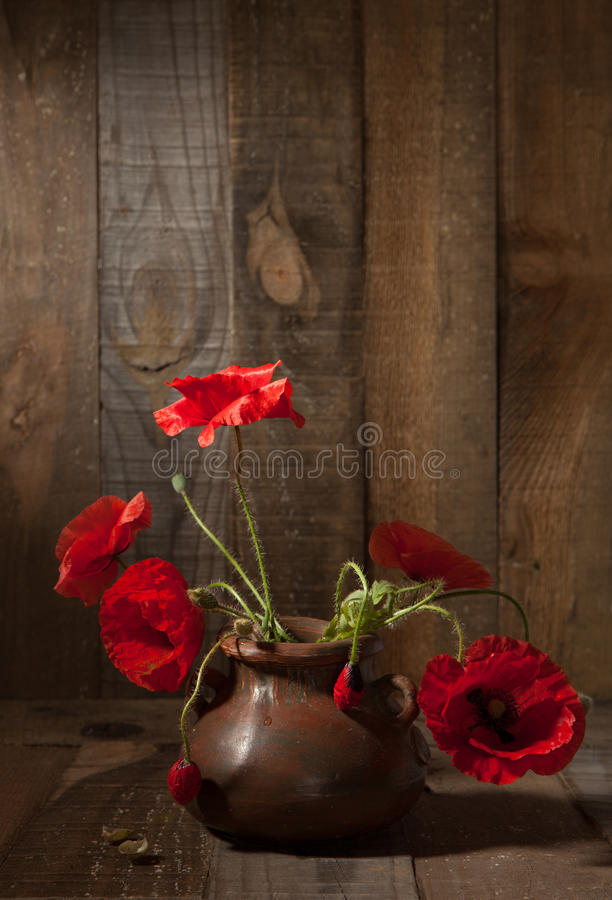 Poppies in clay pot royalty free stock images