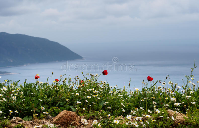 Poppies and daisies on a coast. Poppies and daisies on a coast of mediterranean sea, Turkey royalty free stock image