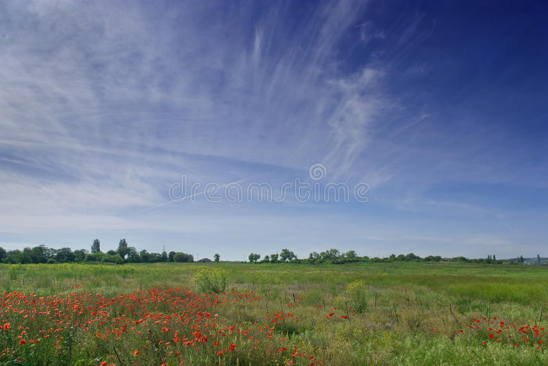 Download Poppies field stock photo. Image of meadow, flowers, landscapes - 36599276