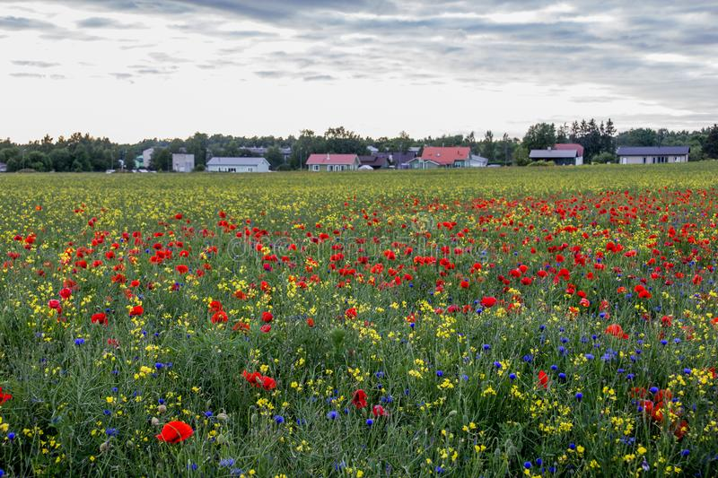 Countryside with beautiful poppy field royalty free stock image