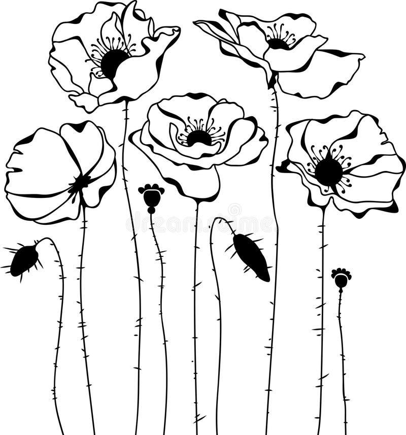 Poppies silhouette on white background stock illustration