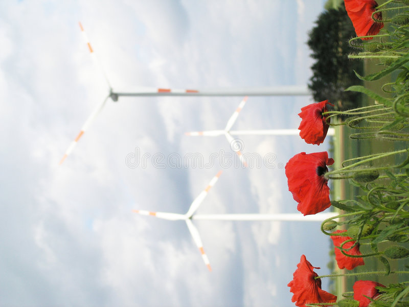 Poppies and wind turbines stock photo