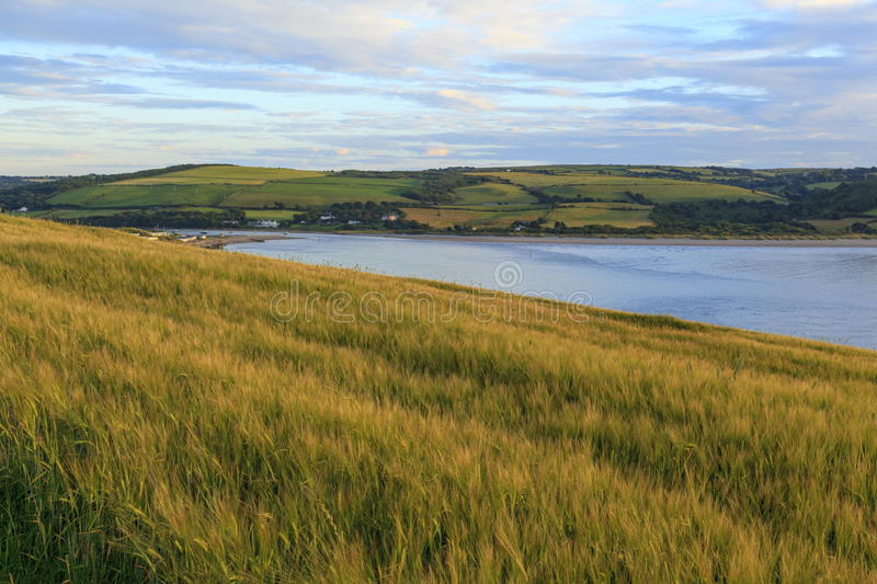 Poppit Sands and the Teifi estuary. Viewed from a wheat field royalty free stock photos
