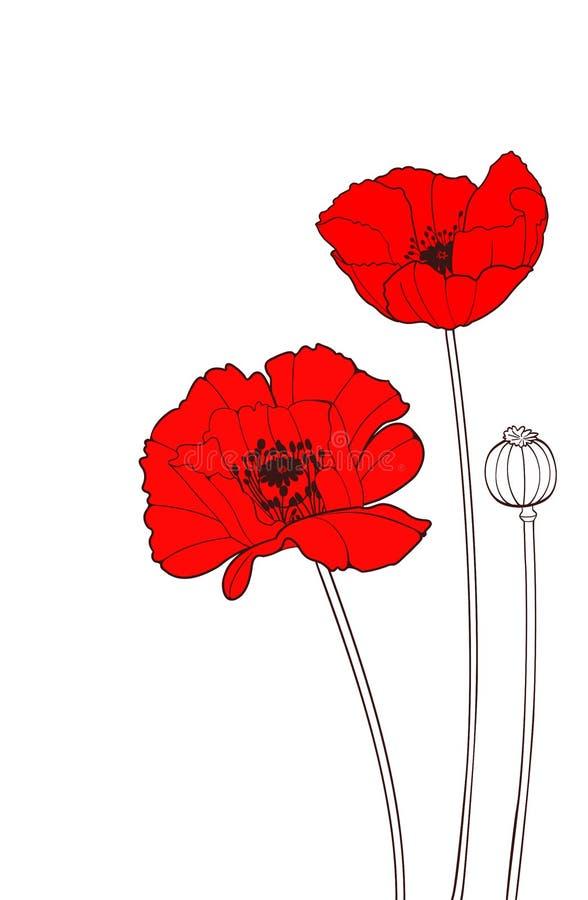 Poppy. Red poppy on a white background royalty free illustration