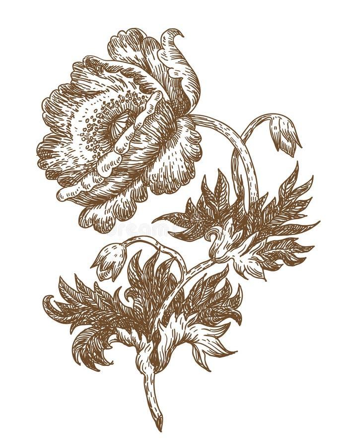 Poppy. Old-styled poppy. freehand drawing stock illustration