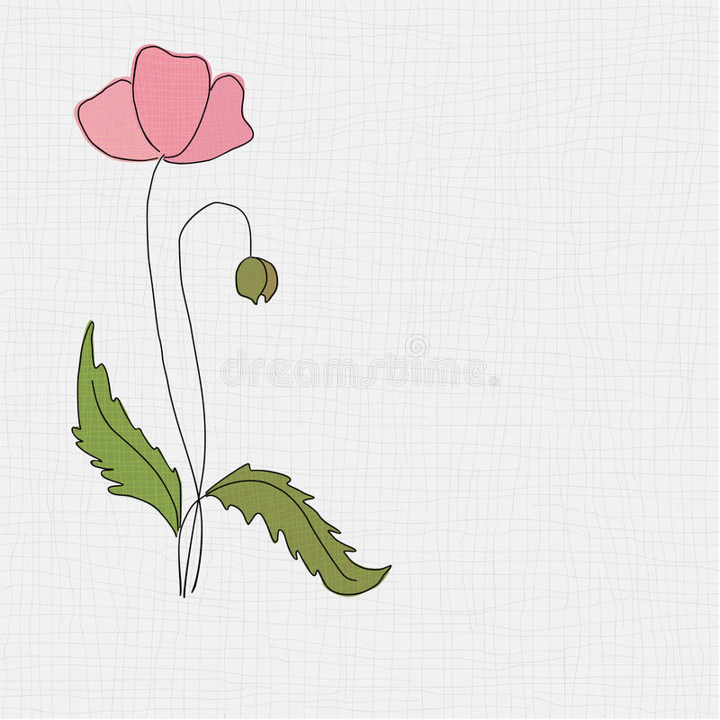 Poppy vector illustration