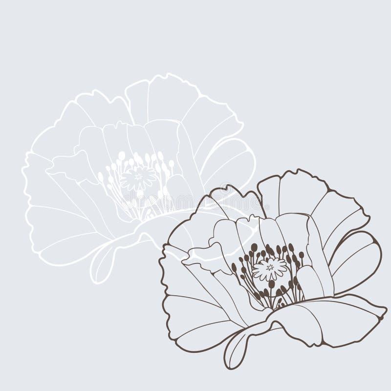 Poppy. Vector design element; poppy flower vector illustration
