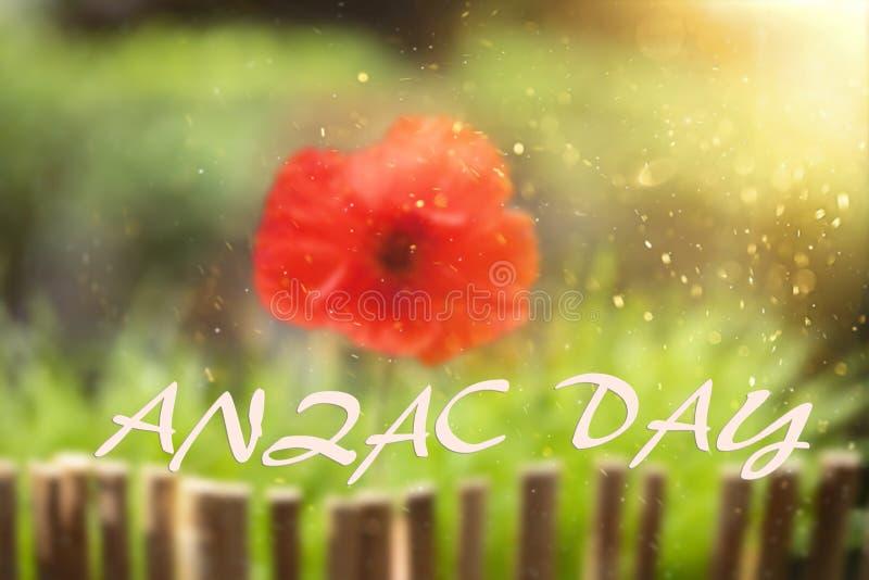 Poppy for Anzac Day stock photo