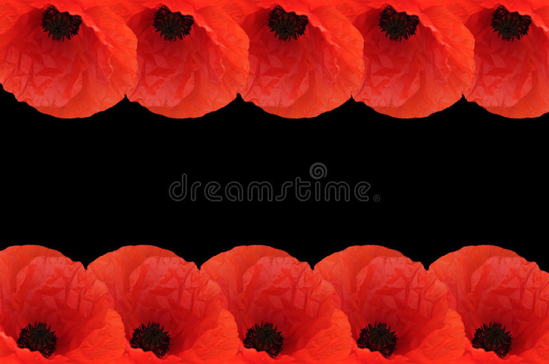 Download Poppy Border Royalty Free Stock Image - Image: 14828426