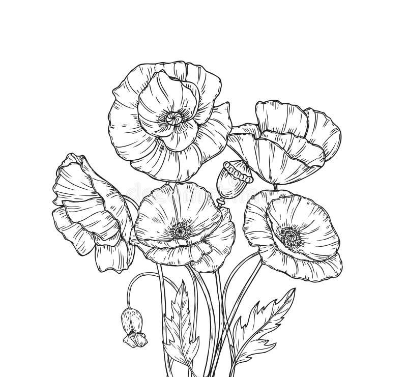 Poppy Bouquet La linea papaveri di arte fiorisce la piantatura decorativa del germoglio di fiore del papavero della pianta del ma illustrazione vettoriale
